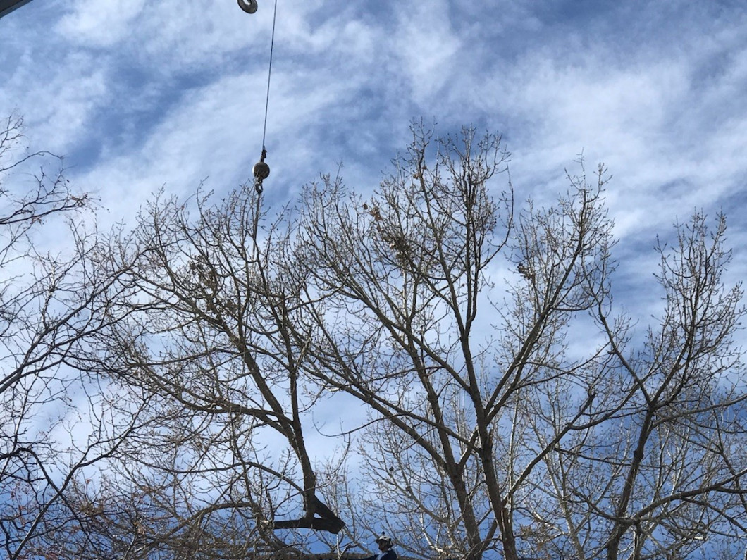 Hire a professional for tree removal service
